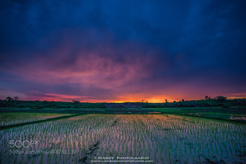 Photograph Rice plant! by Mardy Photography on 500px