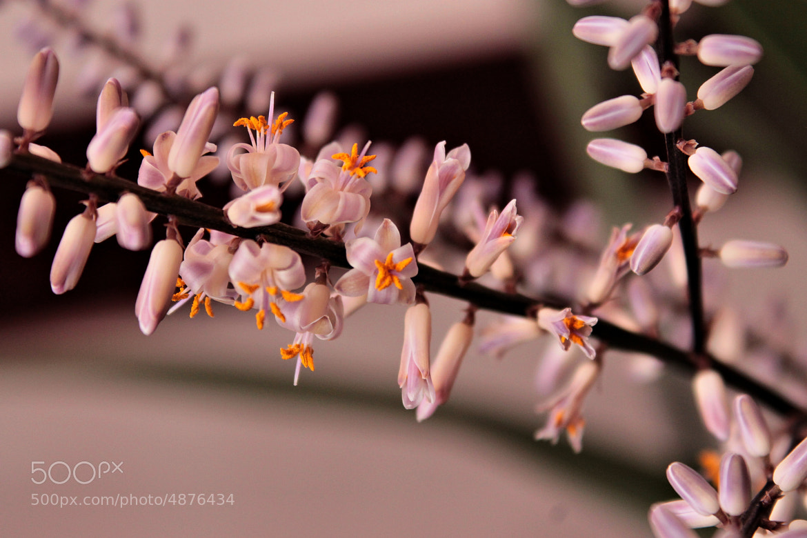 Photograph Waiting spring by Rausch Wilhelm Robert on 500px