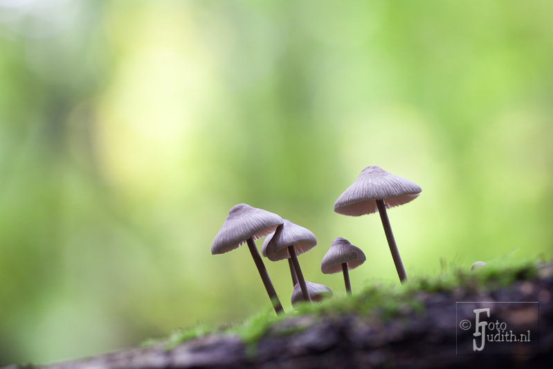 Photograph Mushrooms together by Judith Borremans on 500px