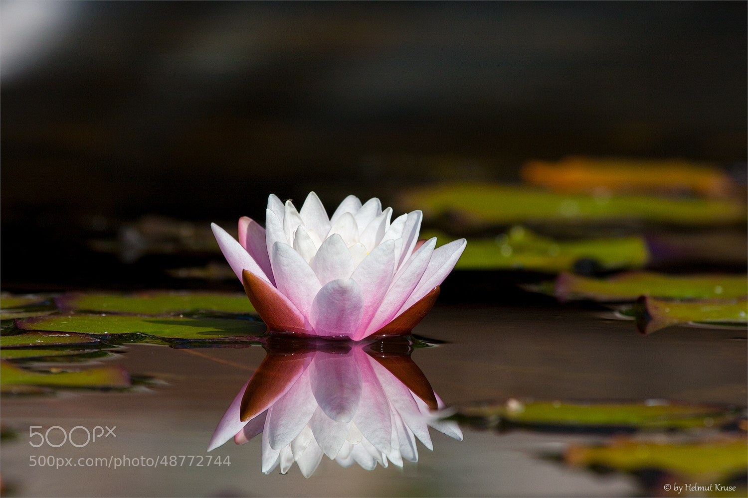 Photograph Reflect of a  waterlily by Helmut Kruse on 500px