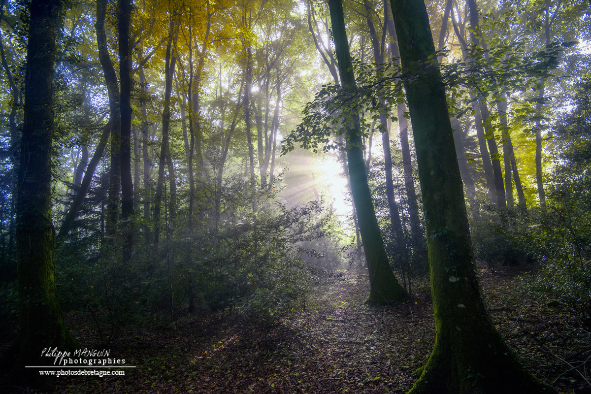 Photograph BROCELIANDE by Philippe MANGUIN on 500px