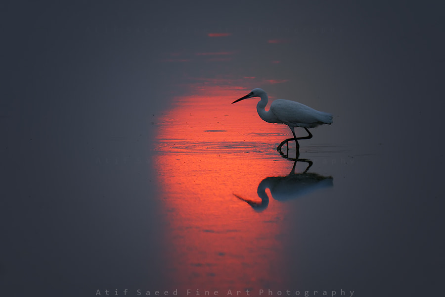 Photograph sun resident.. by Atif Saeed on 500px