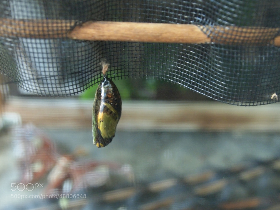 shed cocoon by Pearl Pirie on 500px.com