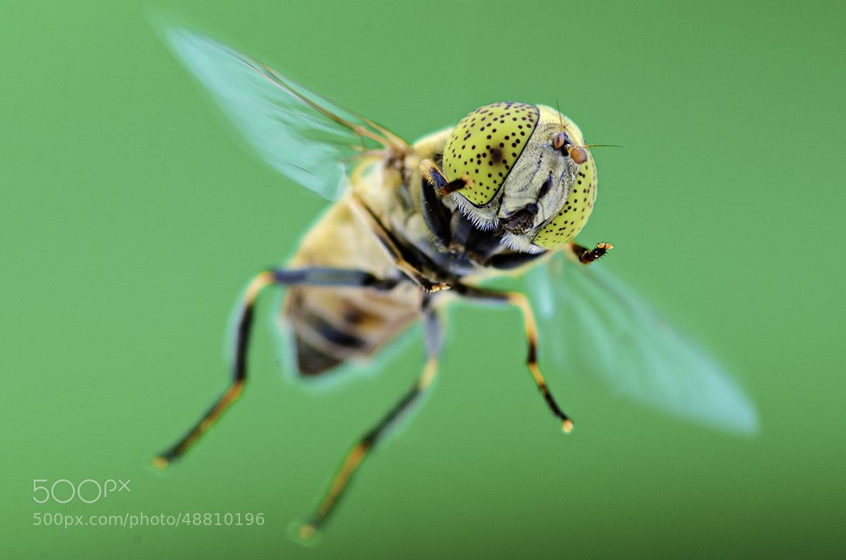 Photograph FLYING by Yudy Sauw on 500px