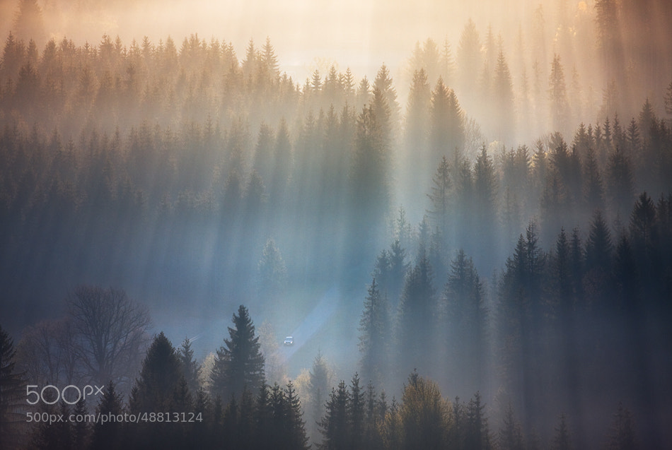 Photograph Ride between spruces by Marcin Sobas on 500px