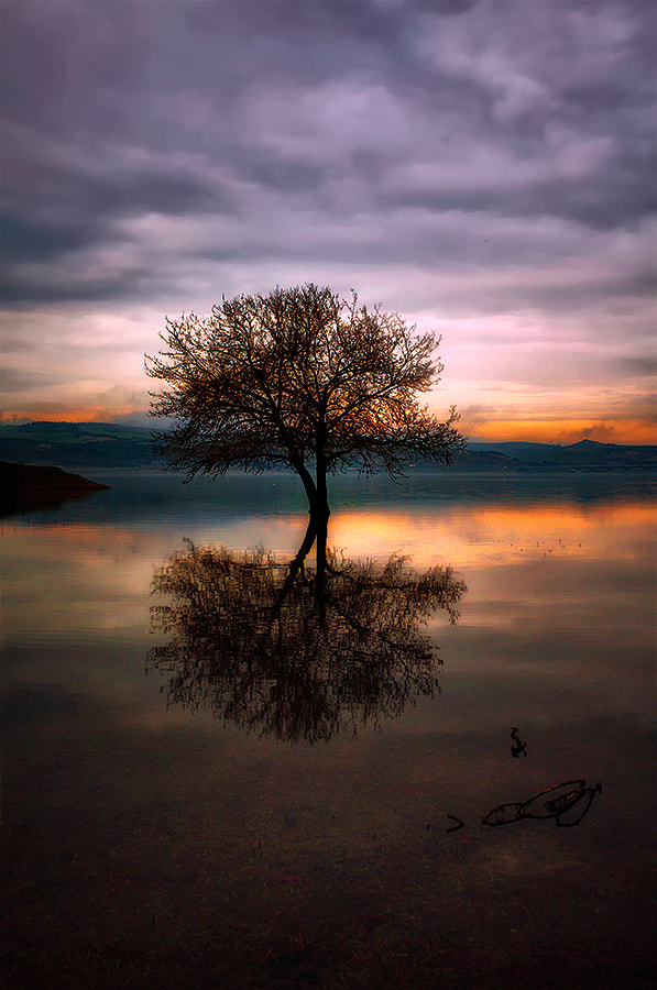 Photograph Symmetry of nature by Christos Lamprianidis on 500px