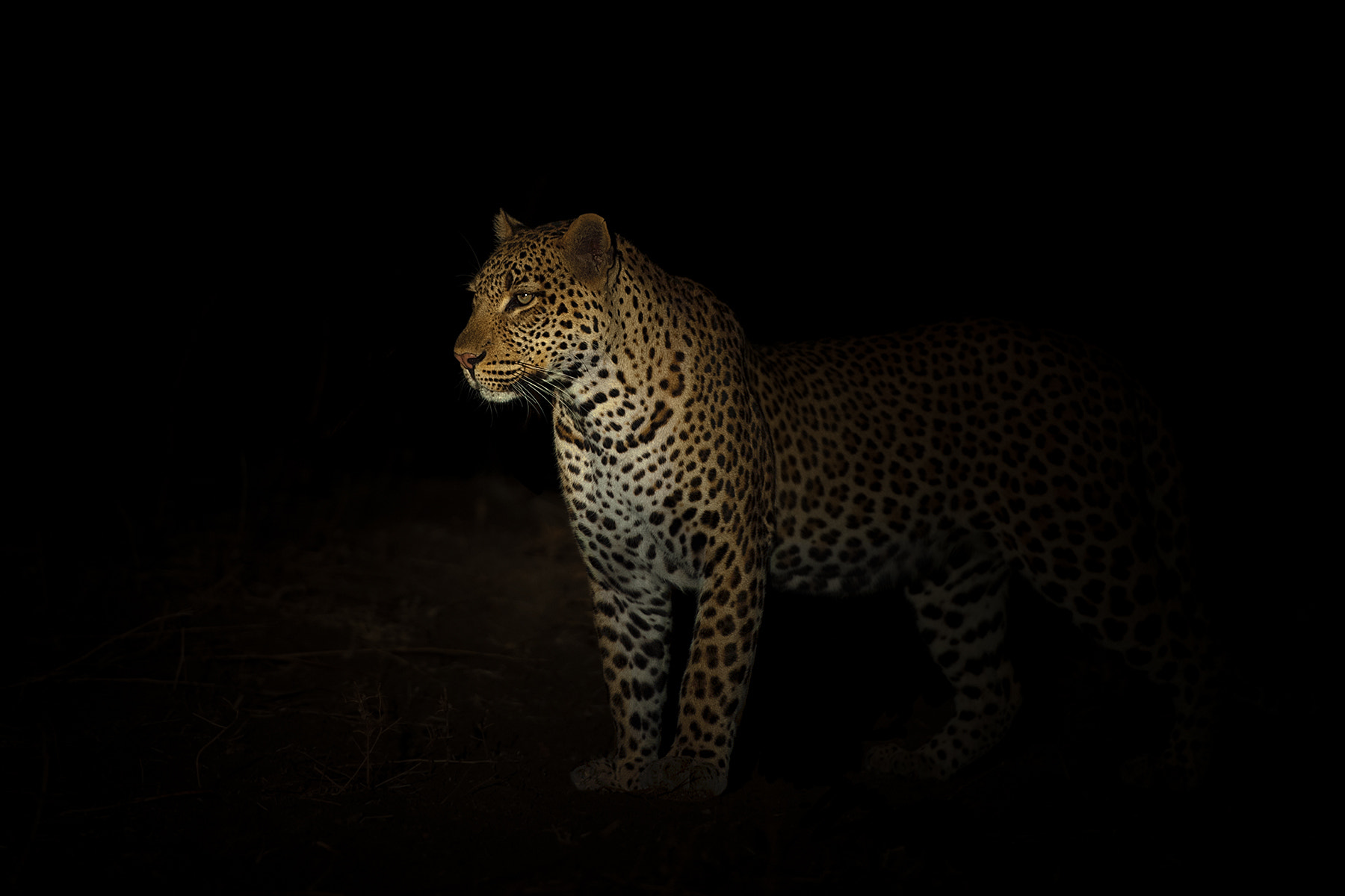 """Photograph The """"Night Stalker"""" by Marc MOL on 500px"""