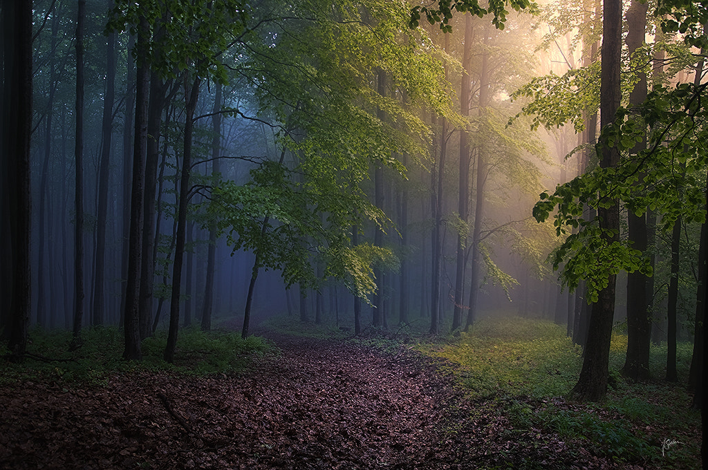 Photograph Forest energies by Janek Sedlar on 500px