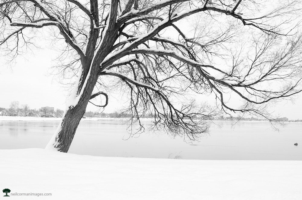 Photograph Winter at Sloans Lake by Neil Corman on 500px
