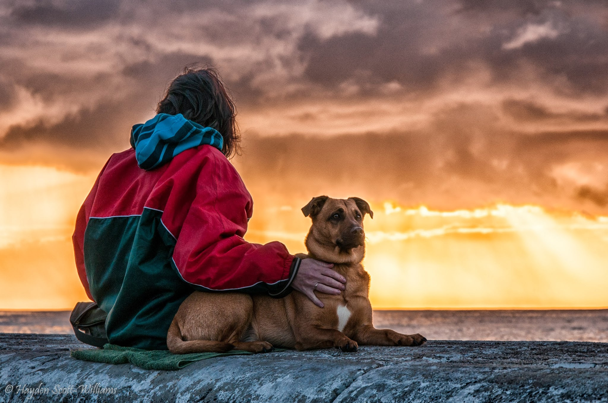 Photograph Companionship by Hayden Scott-Williams on 500px
