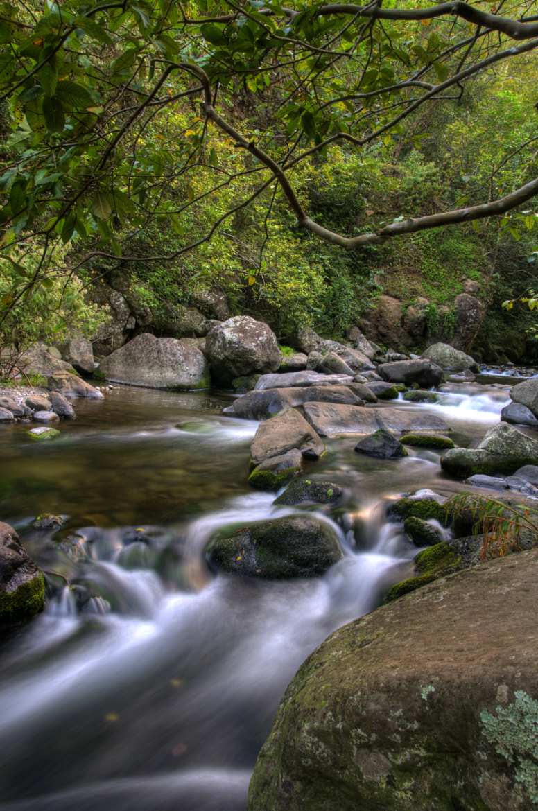 Photograph Iao Valley Stream by Gary McCune on 500px