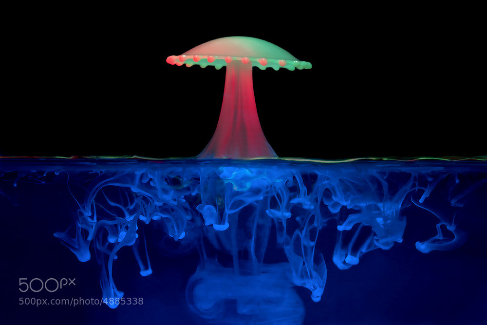 Photograph Watermelon Shroom by Corrie White on 500px
