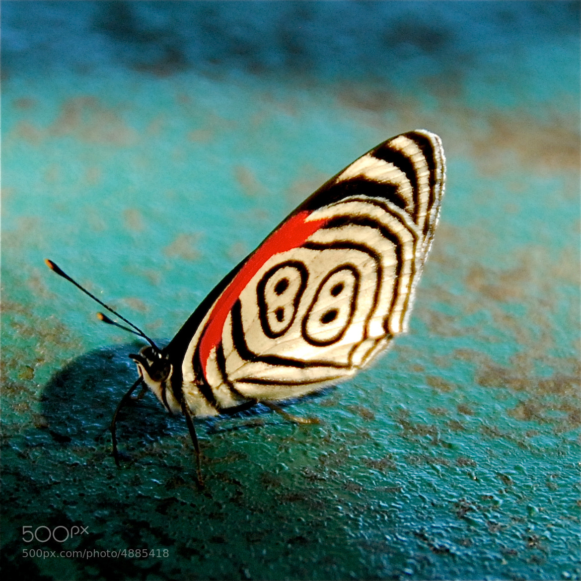 Photograph Mariposa 88 / The 88 Butterfly by Kee Woo  Rhee on 500px