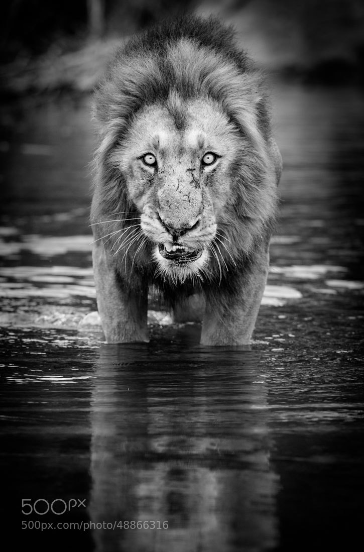 Photograph Face your Fears by Marlon du Toit on 500px