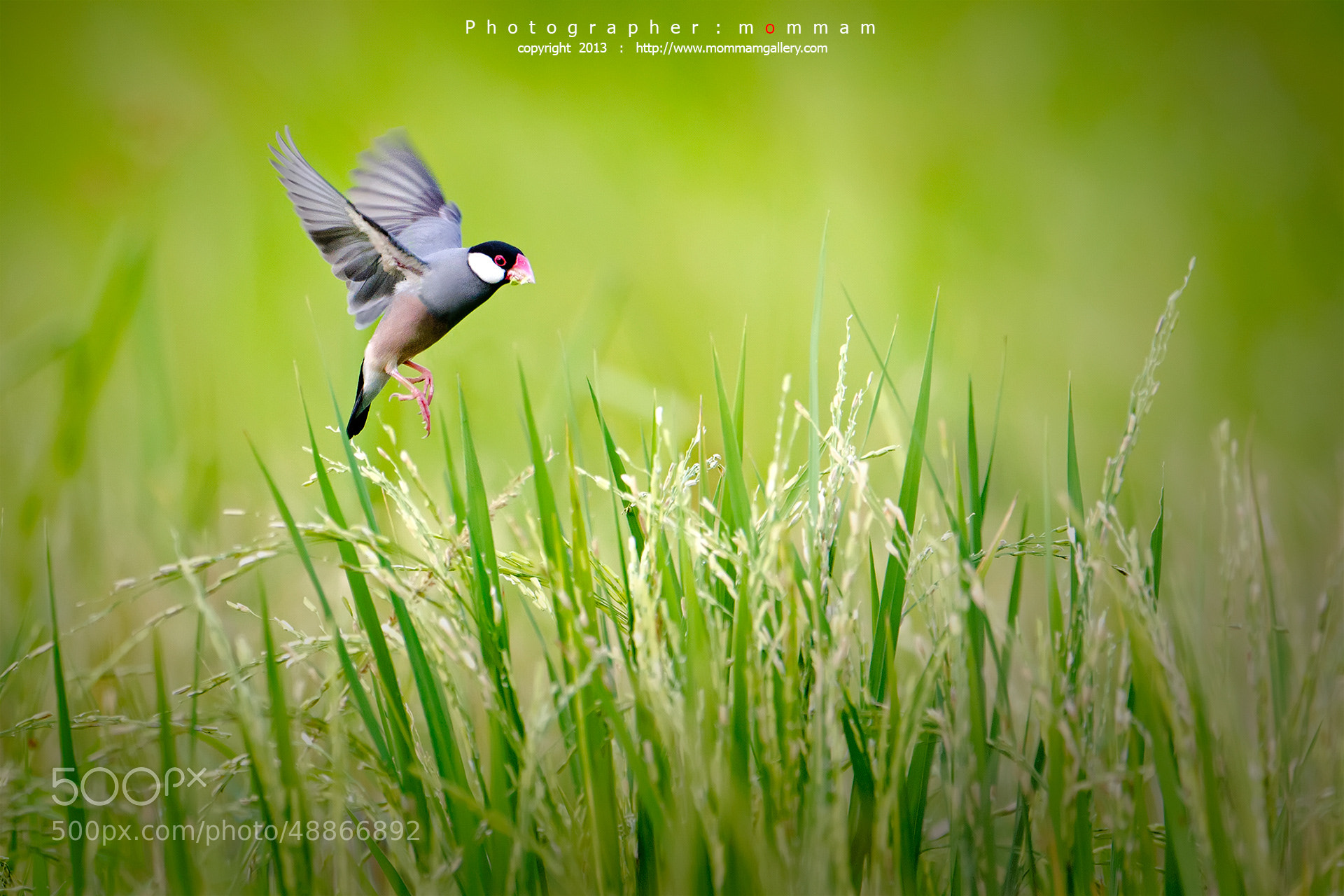 Photograph sparrow... by mommam 777 on 500px