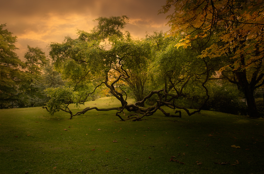 Photograph down to earth by Terje Nicolaysen on 500px