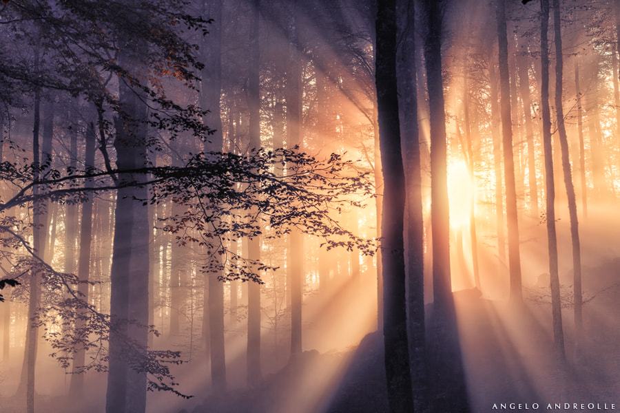 Photograph Magic forest by Angelo Andreolle on 500px