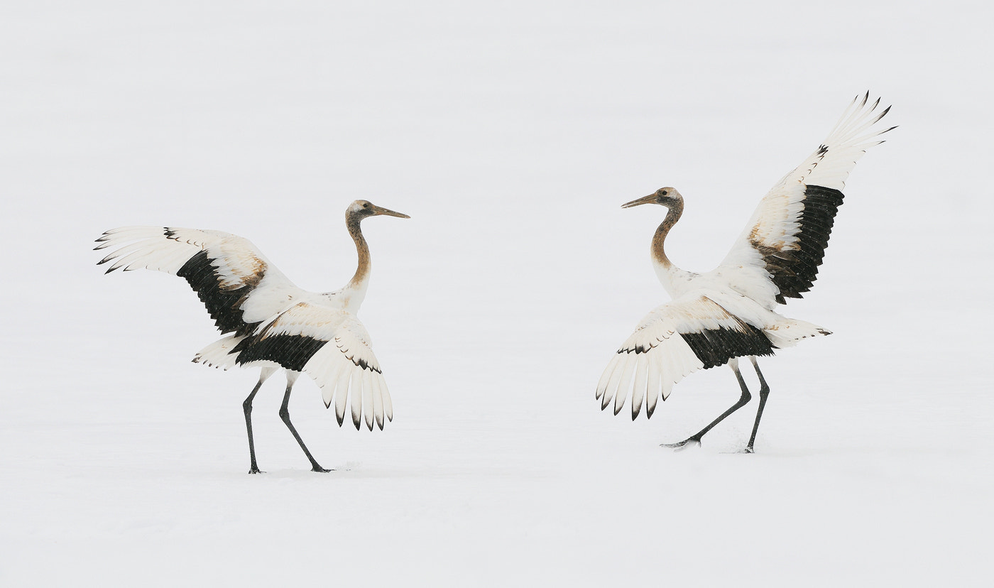 Photograph Young Learned Old Done by Harry  Eggens on 500px