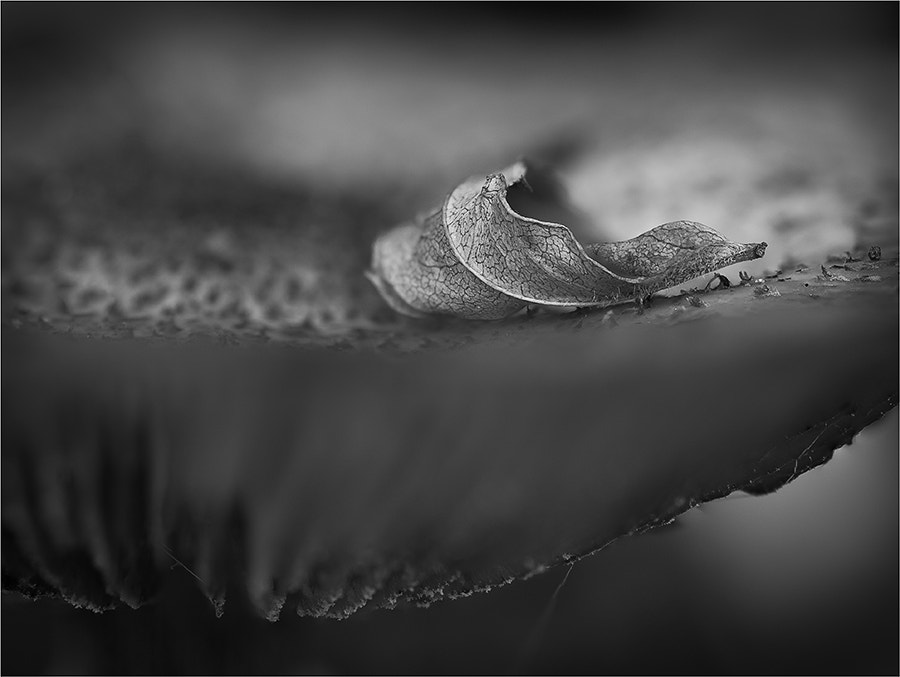 Photograph Fallen by Gary Howells on 500px