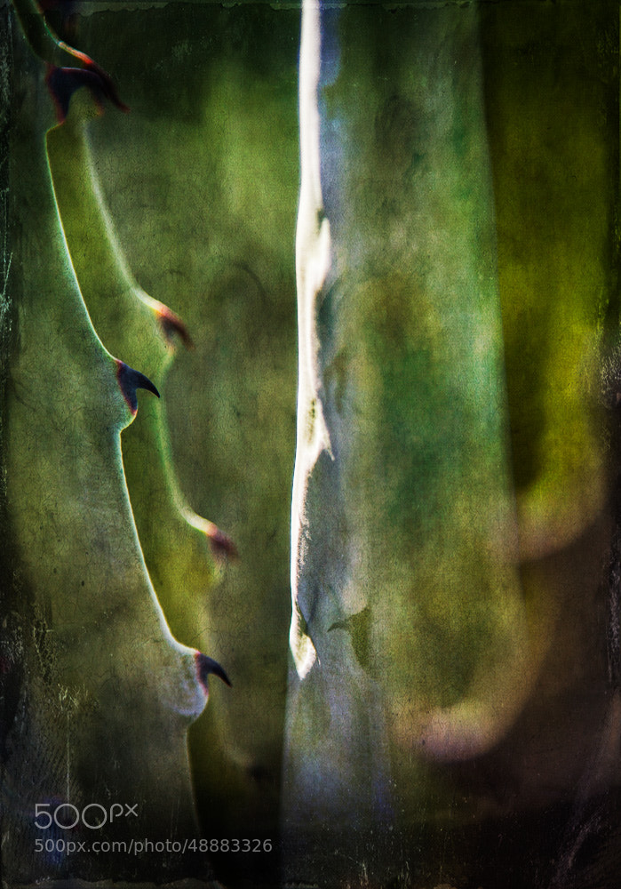 Photograph Textured Agave by Paul Bartell on 500px