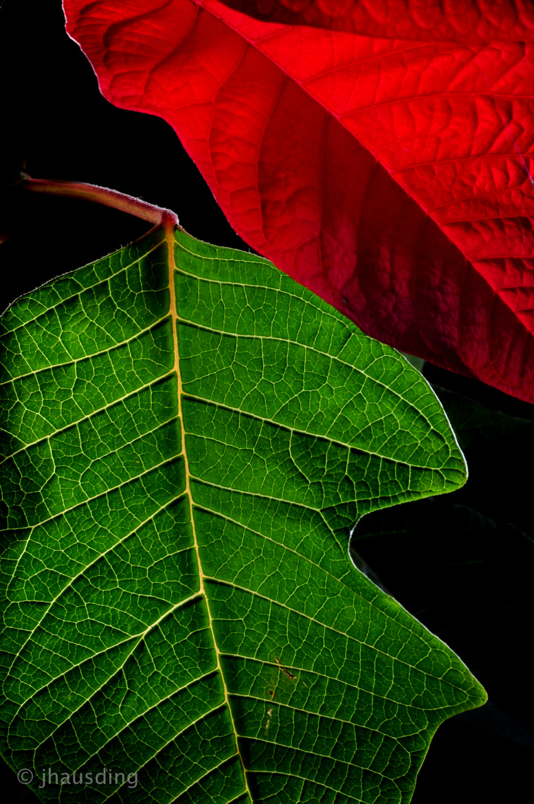 Photograph Leaves by Jan Hausding on 500px