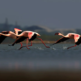 Rare race by Tejas Soni on 500px.com
