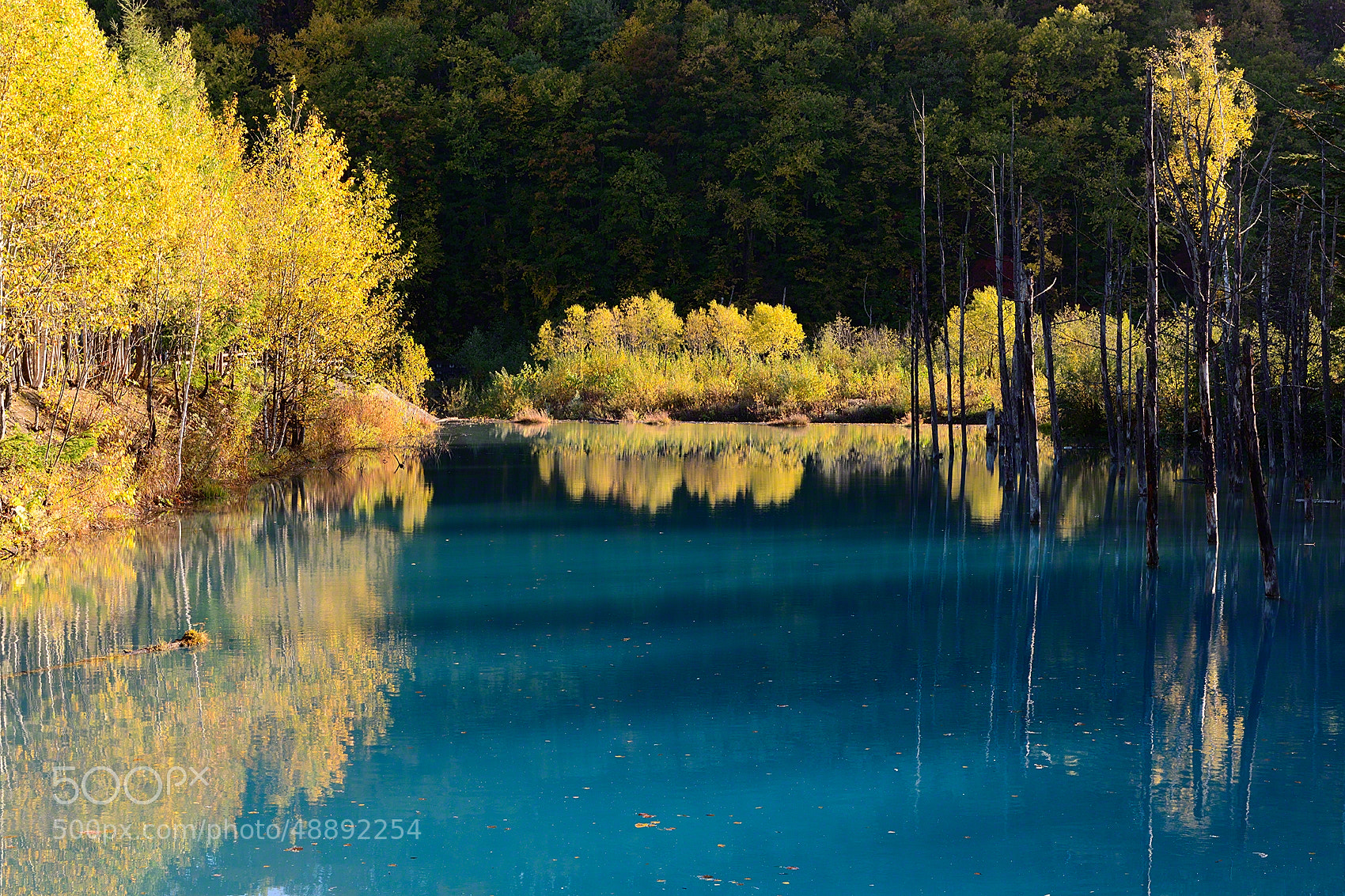 Photograph blue pond yellow leaves hokkaido by kent for Your pond japan