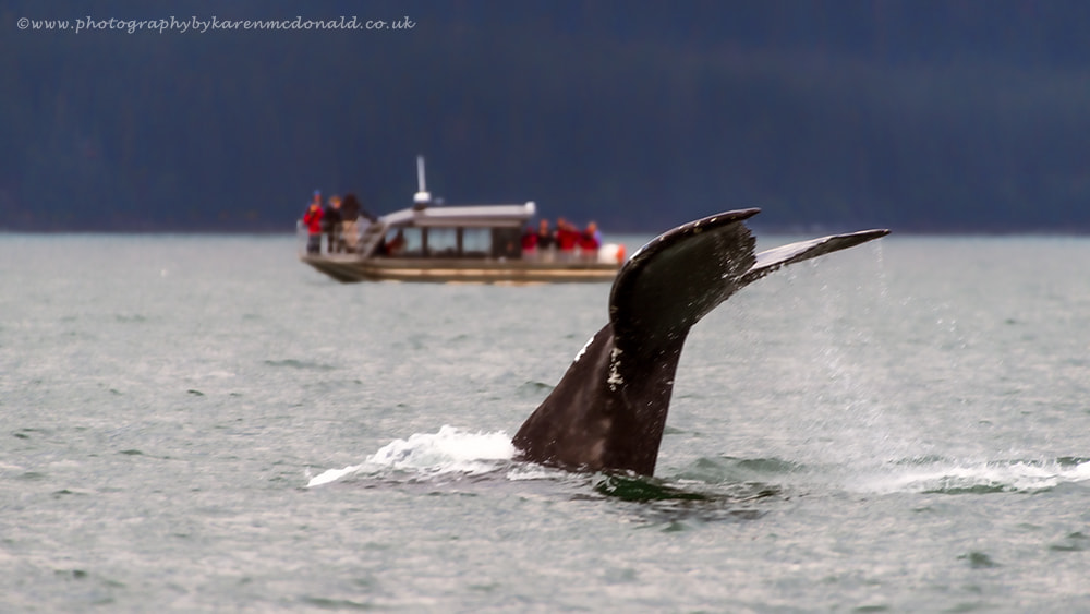 Photograph Whale Watching in Alaska by Karen McDonald on 500px