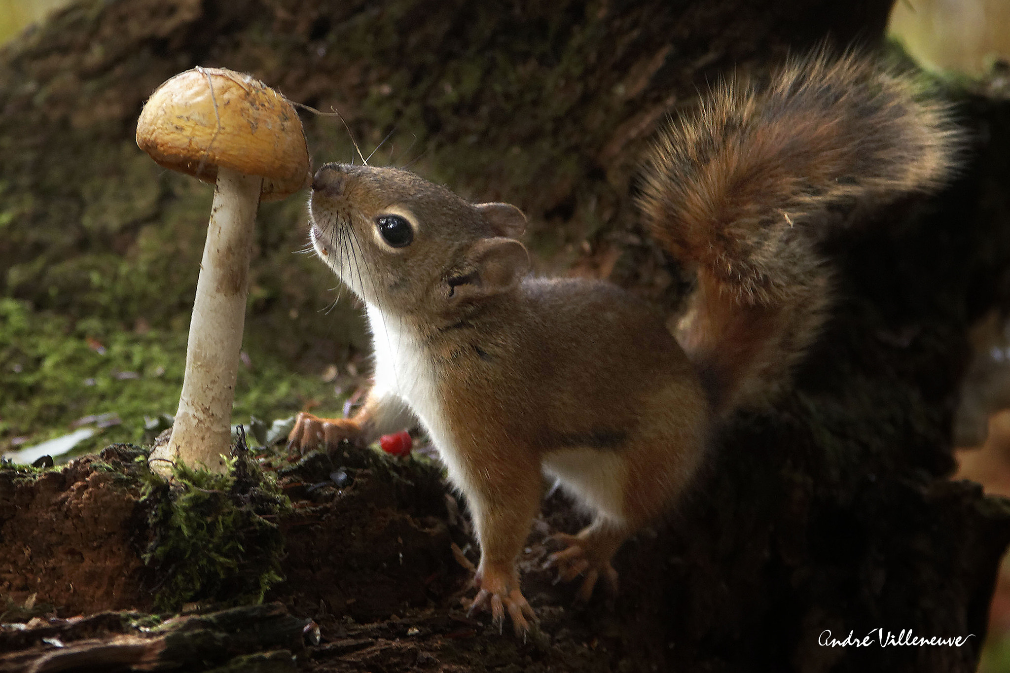 Photograph Here my dinner by Andre Villeneuve on 500px
