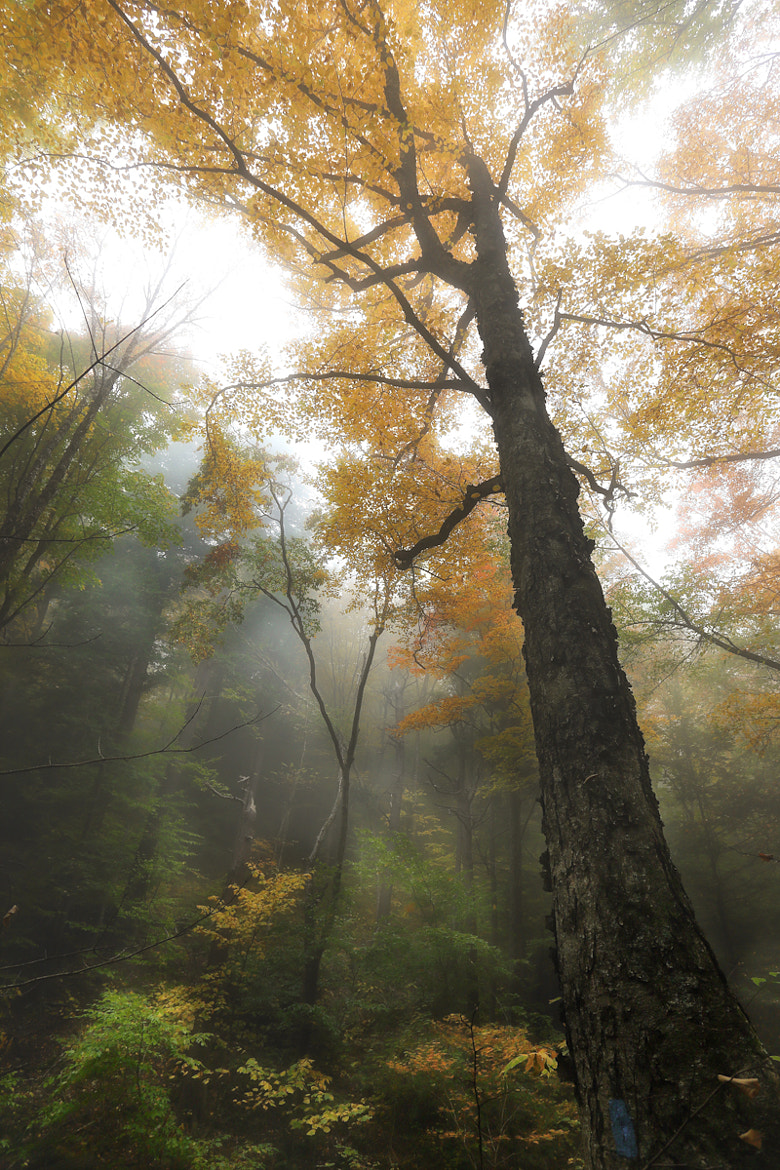 Photograph Canopy Fog by Jay Parker on 500px