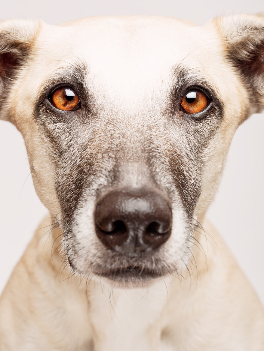 Photograph Mugshot by Elke Vogelsang on 500px