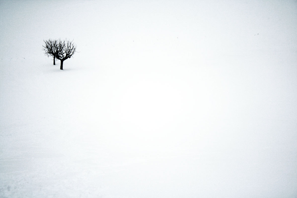Photograph 2 lost trEEs by lara pignotti on 500px