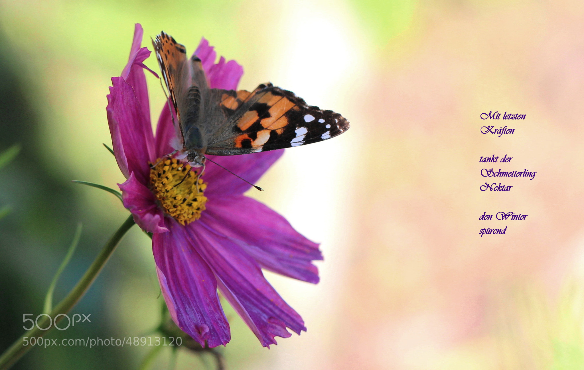 Photograph Two Beauties Of October by Eva Komenda on 500px