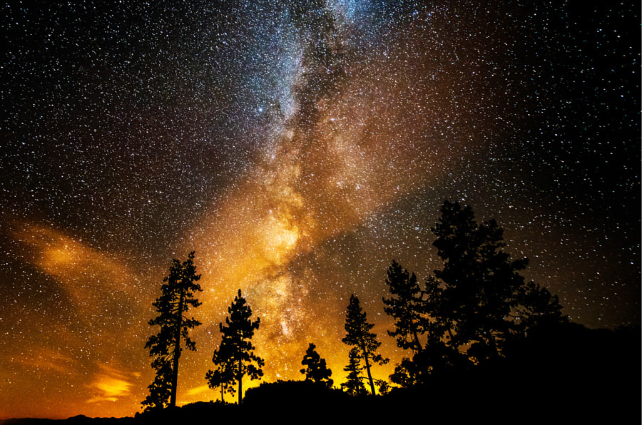 The Milky Way spreads upward from these tress at Sand Harbor Lake Tahoe. The golden glow is from city lights across the lake.