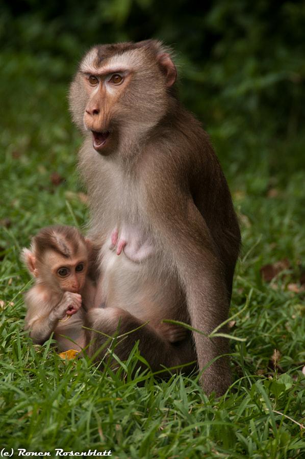 Monkey Relationship