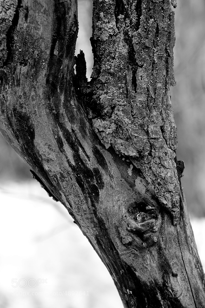 Photograph Wood texture II by Marie BALLEFIN on 500px