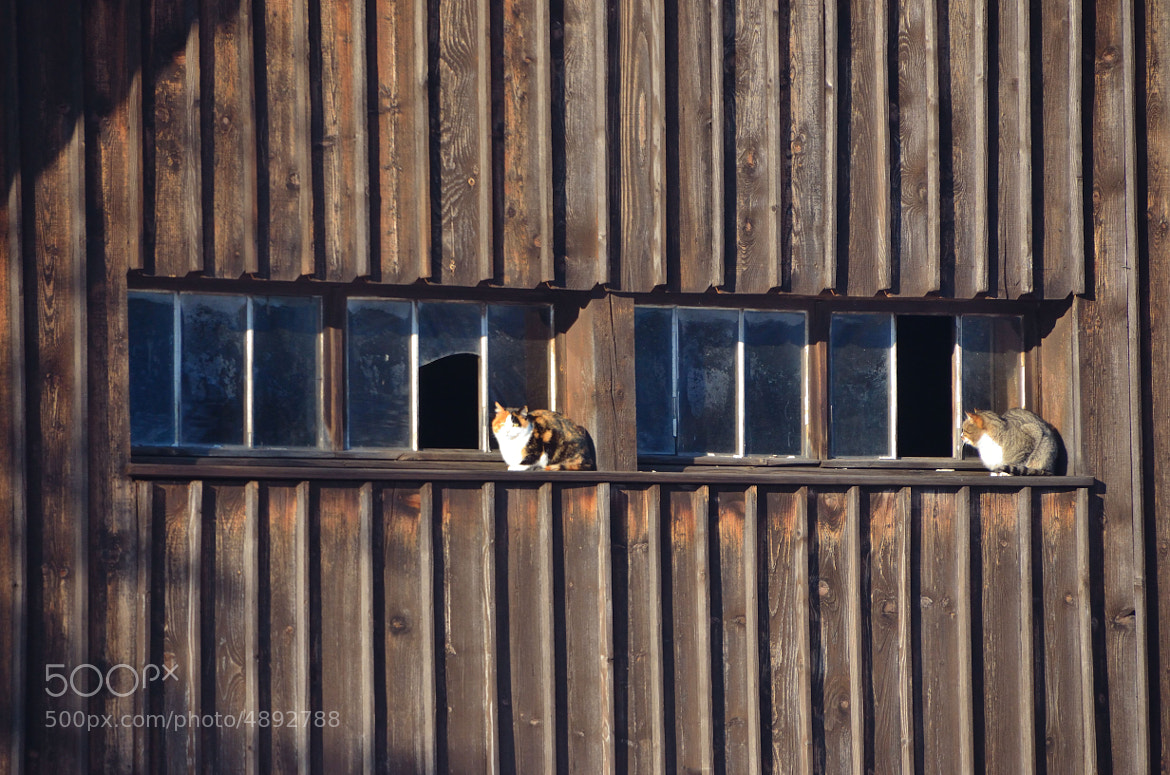 Photograph Cats' Lazy Sunday Afternoon by Peter Kempf on 500px