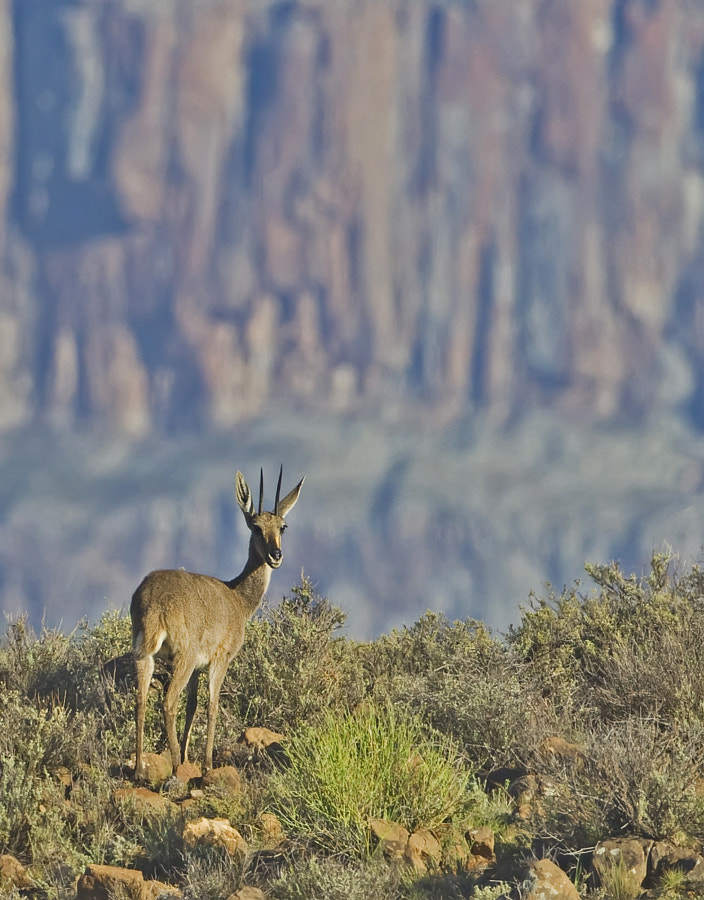 Standing in front of the cliffs in Karoo National Park, South Africa