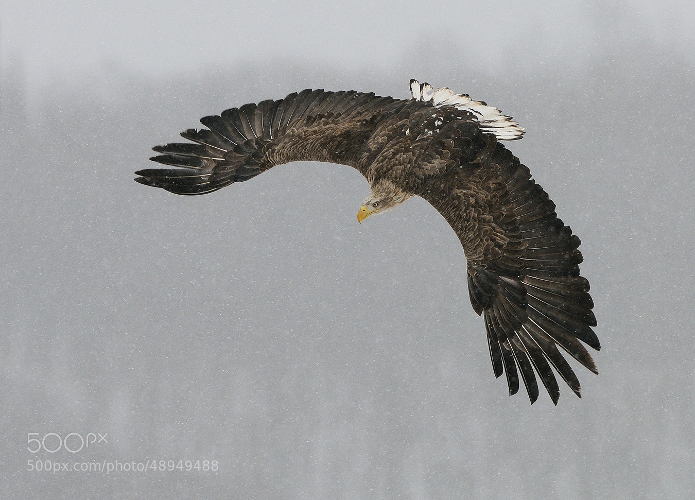 Photograph Euro Sign by Harry  Eggens on 500px