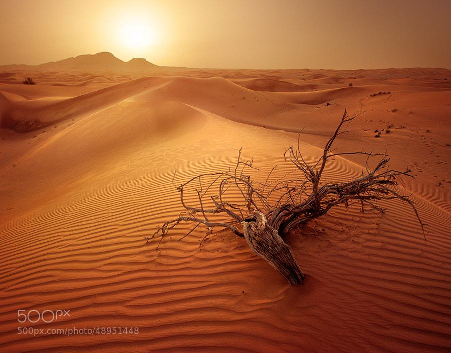 Photograph Warmness by Ali AlNuaimi on 500px
