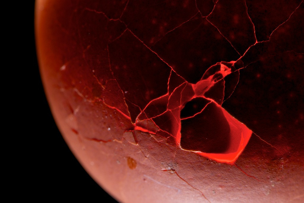 Photograph Phoenix Egg by Timur Anikeev on 500px