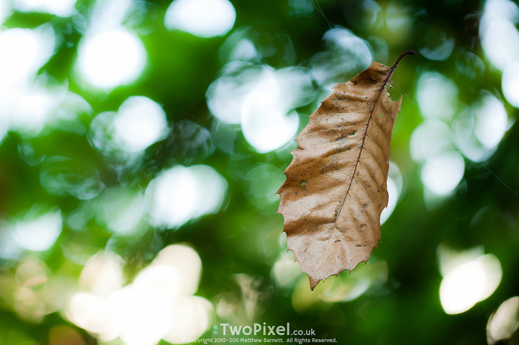 Photograph Hanging leaf by Matthew Barnett on 500px