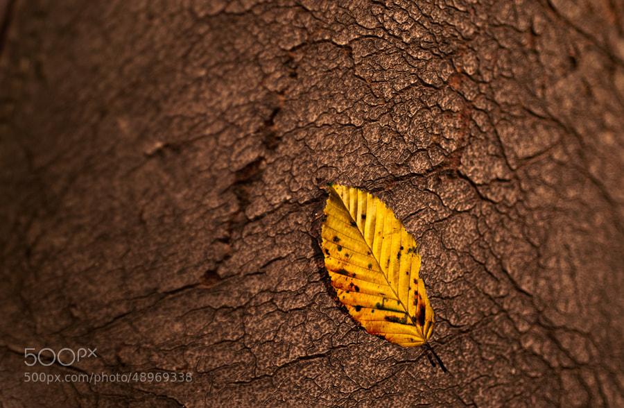 Photograph autumn by Gunter Werner on 500px