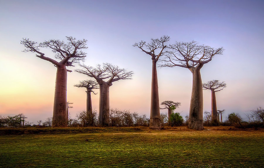 Photograph Baobab ! by Farid Sani on 500px