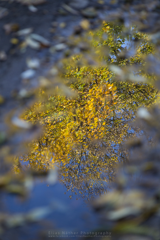 Photograph Natural Mirror by Elias Näther on 500px
