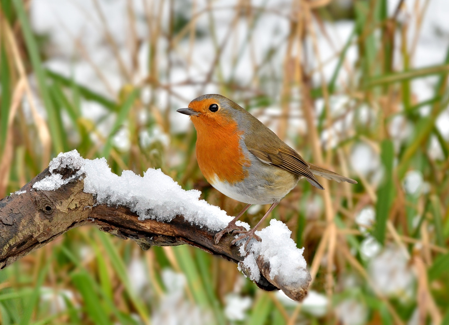 Photograph Robin by John Robinson on 500px
