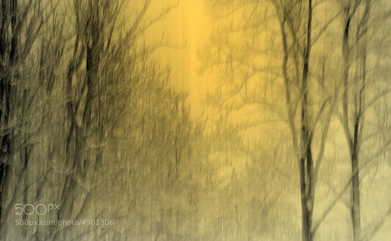 Photograph Winter sun by Emin Kucuk on 500px