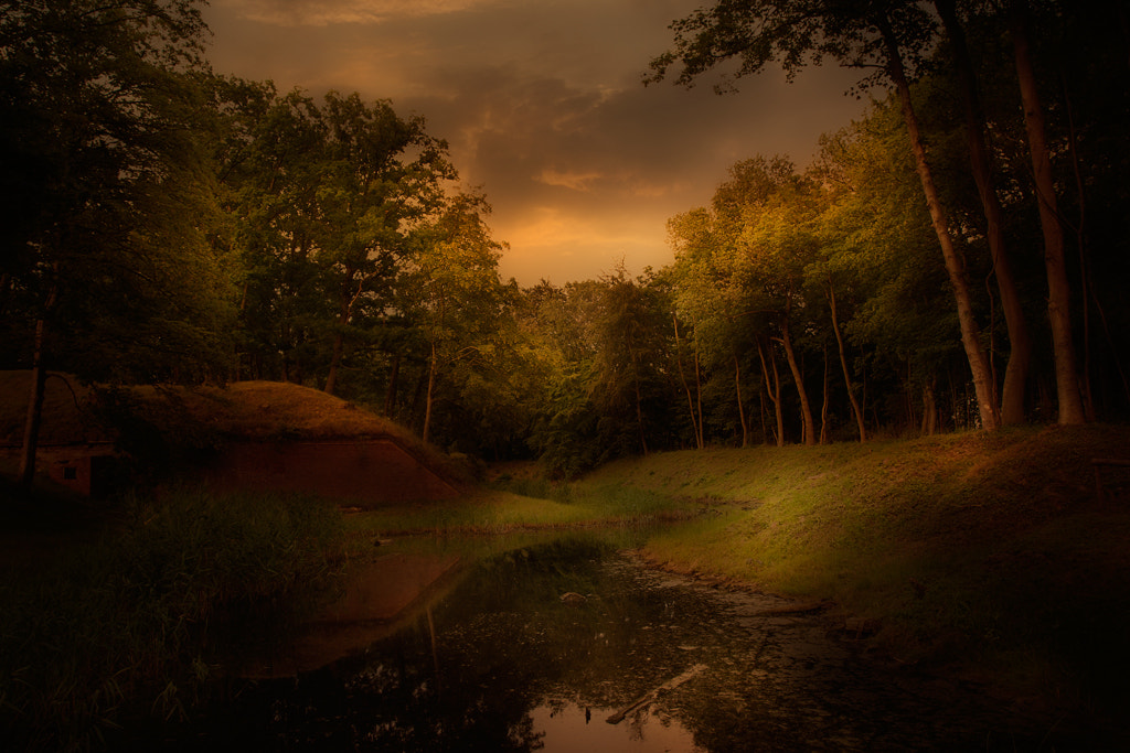 Photograph Forest by Terje Nicolaysen on 500px