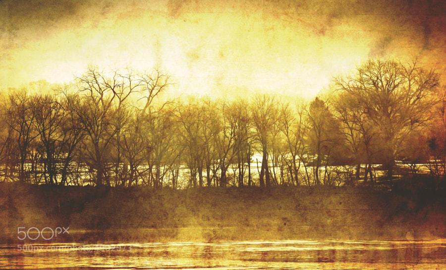 Trees along the Wisconsin River in Prairie du Sac.  http://fineartamerica.com/featured/trees-scott-norris.html