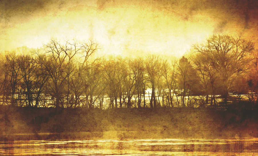 Trees along the Wisconsin River in Prairie du Sac.